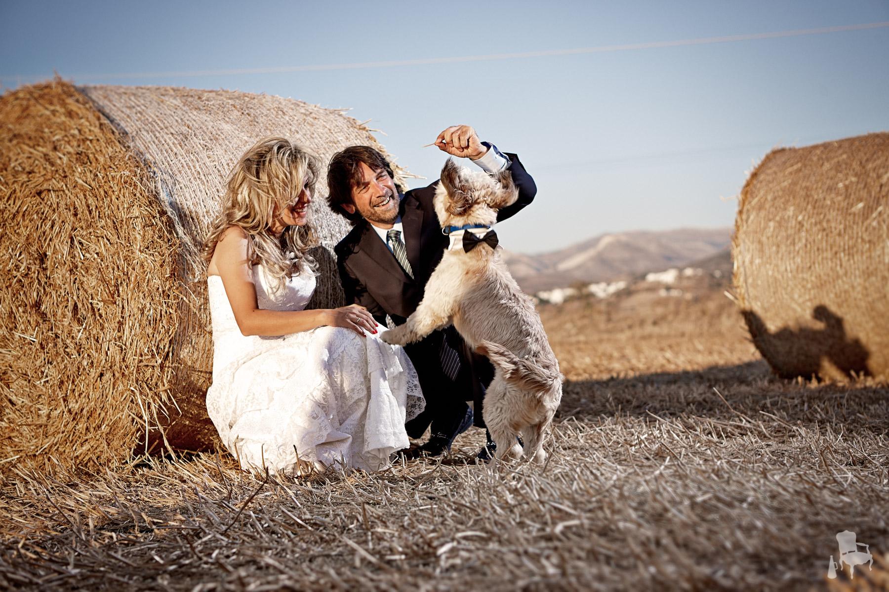 wedding photographer dog
